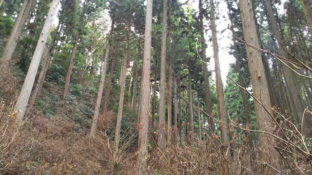 御岩神社参道の杉並木