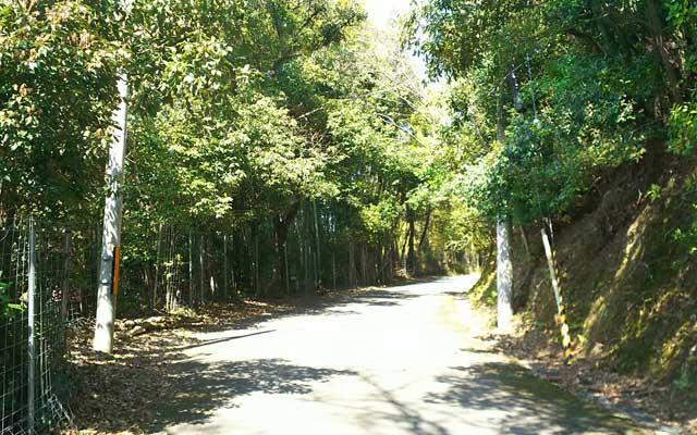 神峯山寺への参道