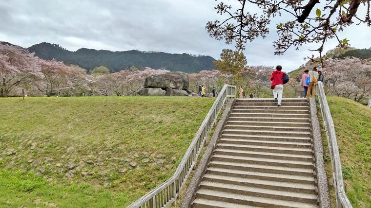 桜と石舞台古墳